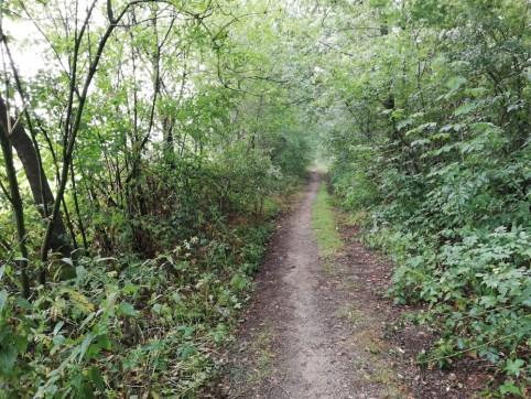 In het bos bij Hesingen
