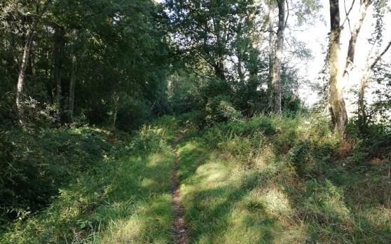 Een smal pad door het Aamsveen