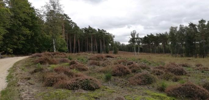 Heide in het Nationaal Park de Meinweg