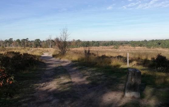 In de Kalmthoutse Heide, met grenspaal
