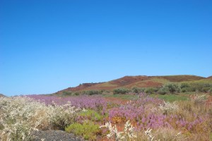 Wildflowers brighten the Pilbara landscape