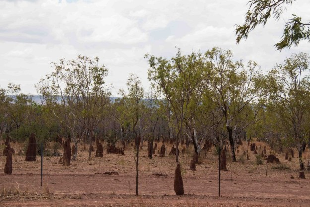 Termite hills. In places they're so common it feels like you're driving past a cemetery