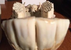upper molars