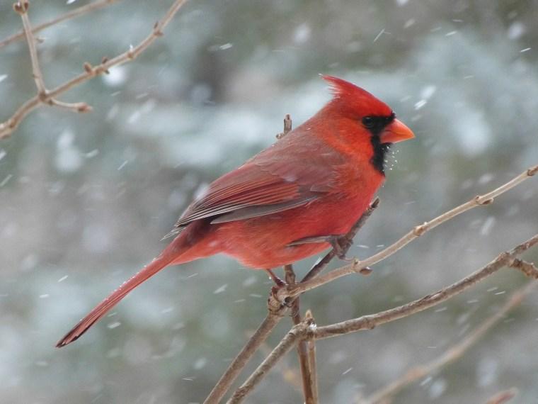 The Cardinal Sign