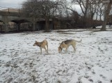 2 cool-colored dogs (;