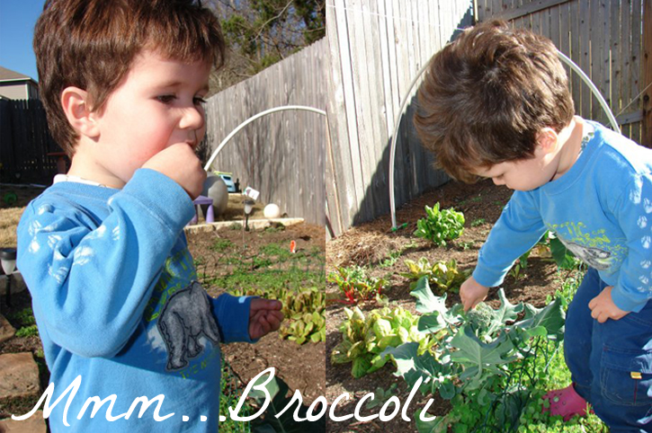 Photo of toddler eating broccoli in the garden.