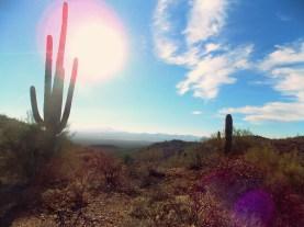 Saguaro Views