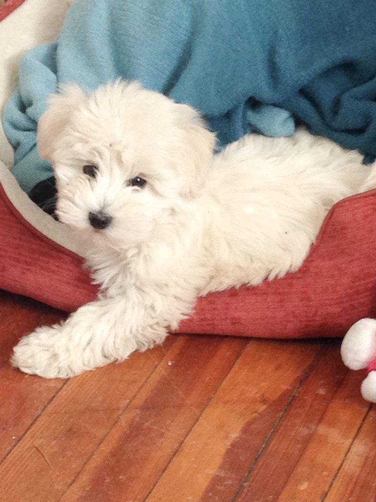 Eva as a puppy