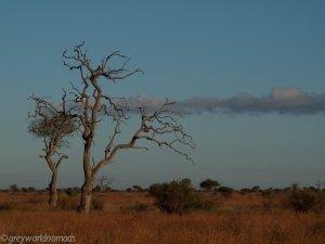 sculpture of dead tree in the evening sun