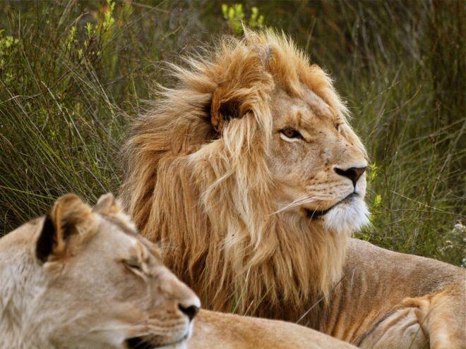Plettenberg Bay Game Reserve ©greyworldnomads