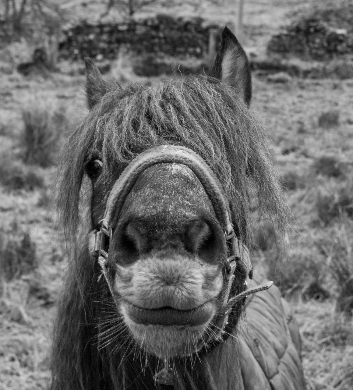greyworldnomads-scotland-dunoon-58.jpg