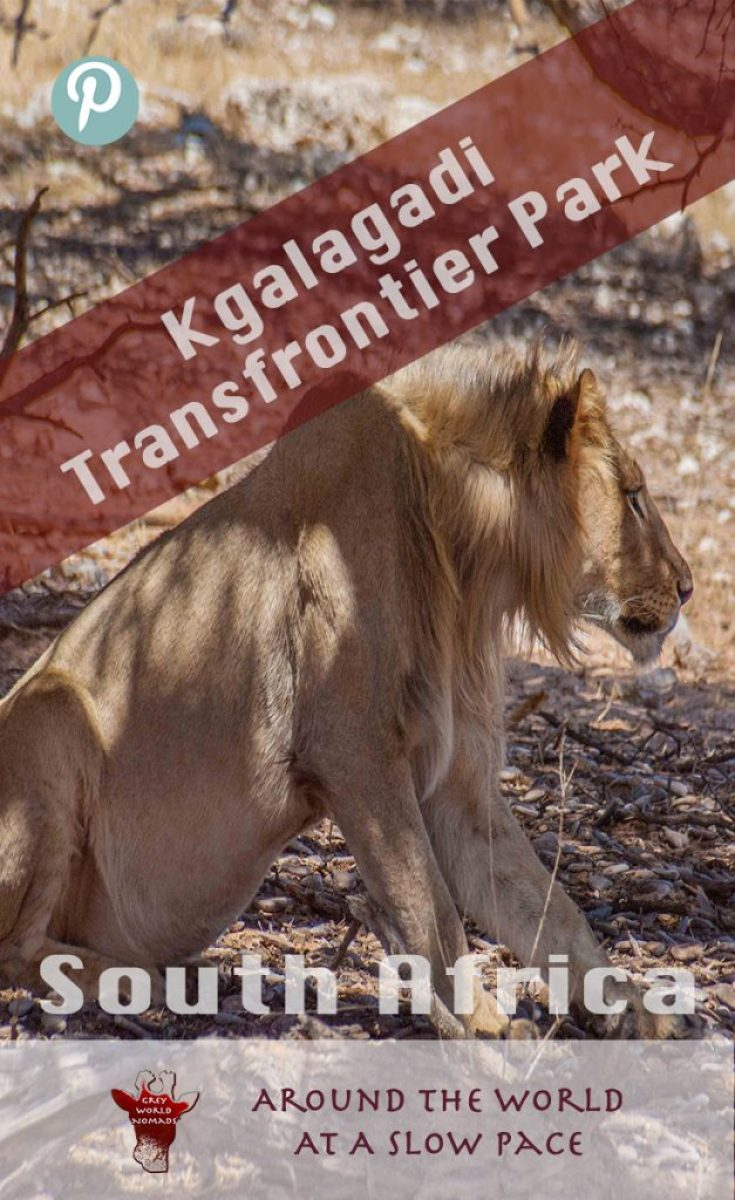 kgalagadi-frontier-park-southafrica-1