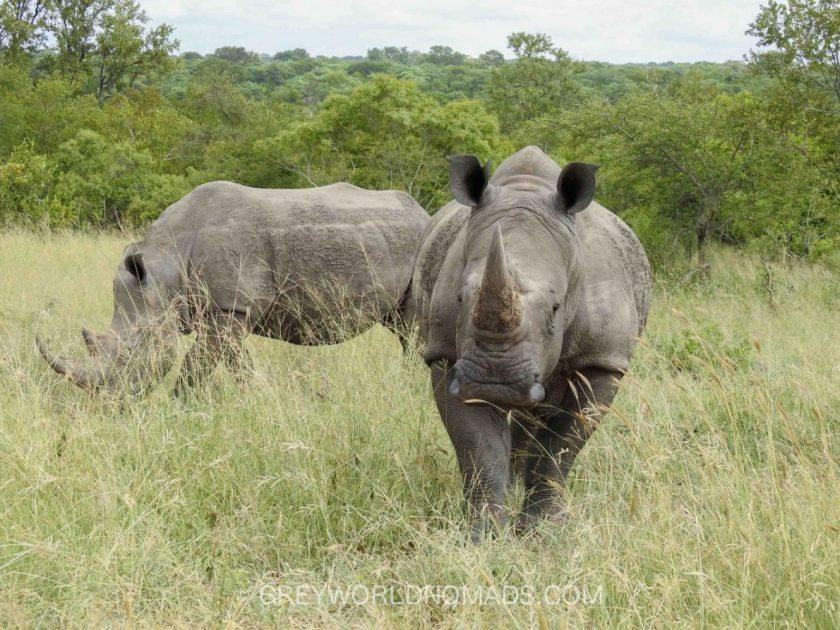 Pretoriuskop, Kruger National Park