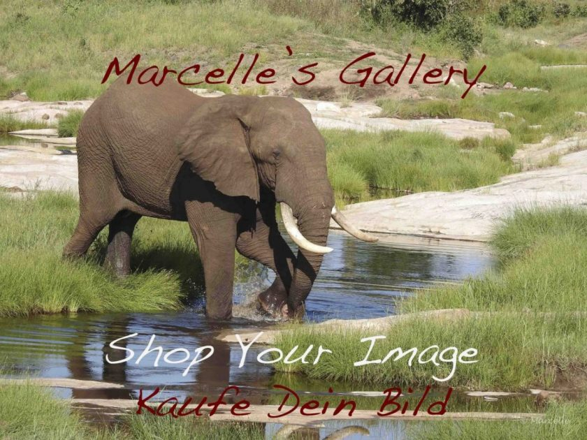 shop-your-image
