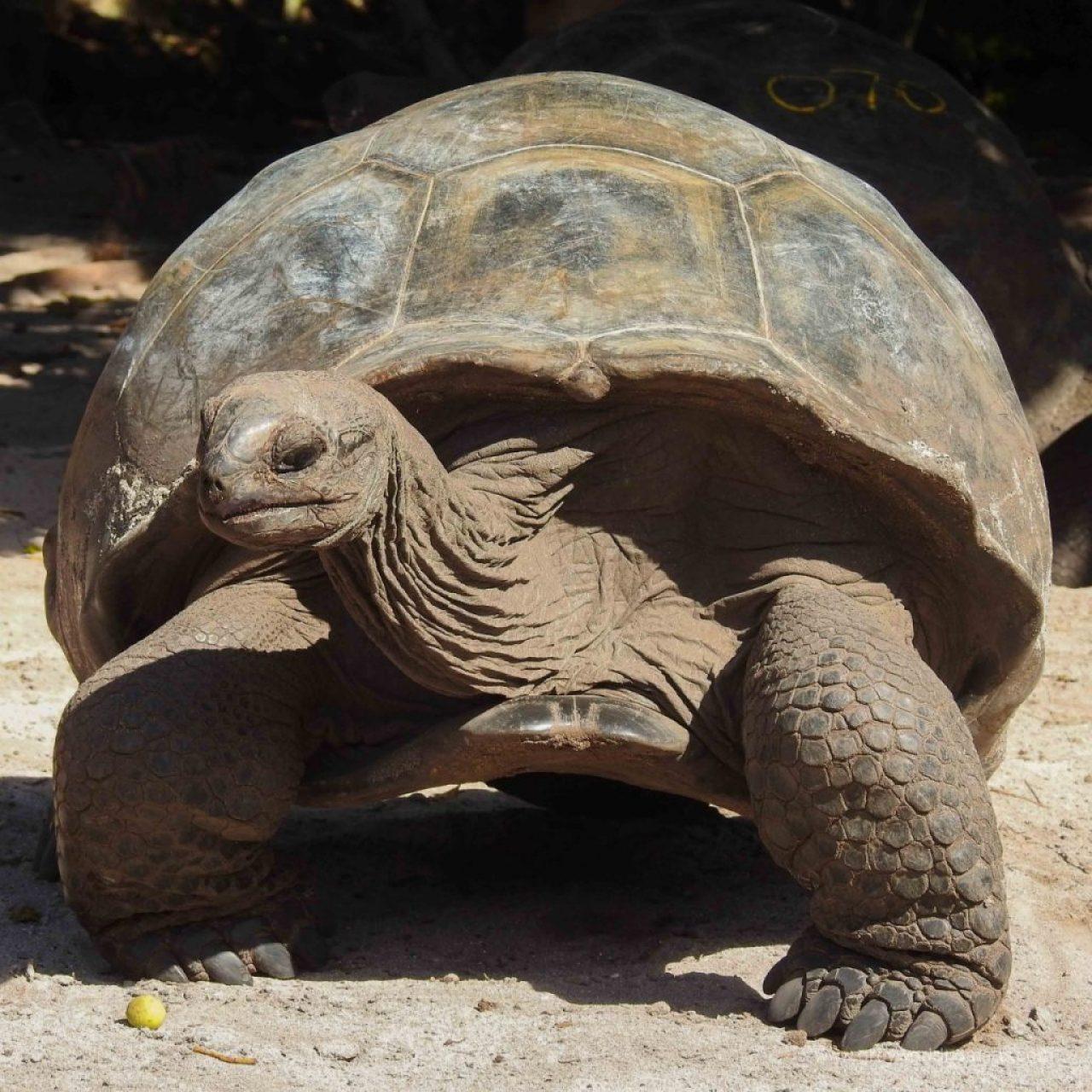 turtle island seychelles, ile curieuse seychelles, ile de tortues