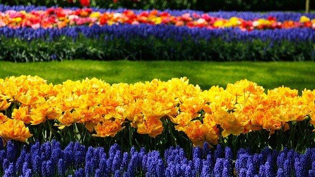 Blumenpark in Holland, Holland im Mai, Blumenparade in Holland, Tulpenblüte Holland wann, Busreisen zum Keukenhof, Amsterdam Keukenhof öffentlichen Verkehrsmitteln, alles über Tulpen.