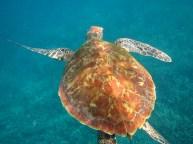 Friendly turtle :-)