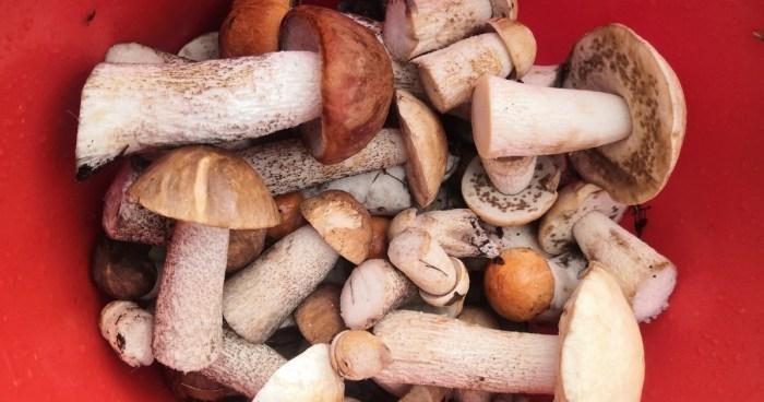 Какие грибы растут в Омской области.