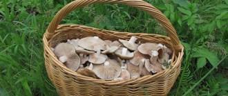 Какие грибы растут в Ставропольском крае.