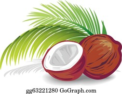 Coconut Clip Art Royalty Free Gograph