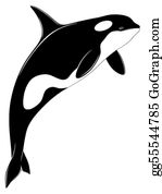 Killer Whale Clip Art Royalty Free GoGraph