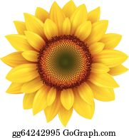 sunflower clip art - royalty free
