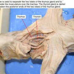 Fetal Pig Spinal Cord Diagram Sparx Enterprise Architect The Gallery For Gt Dissection Labeled