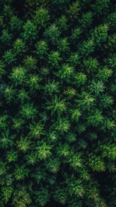 Hneri Woods Drone Wallpaper
