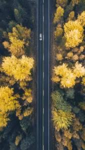 Hneri Fall Leaves Drone Wallpaper