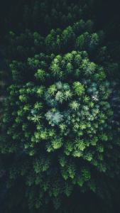 Hneri Drone Image Forest