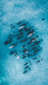drone wallpaper with dolphins