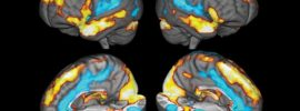 Your brain on gratitude: How a neuroscientist used his research to heal from grief