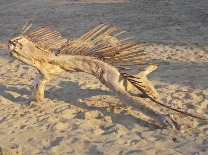"""As I drew nearer, I discovered that it was a very large piece of driftwood that someone had added split dried palm branches to to form the """"comb."""""""