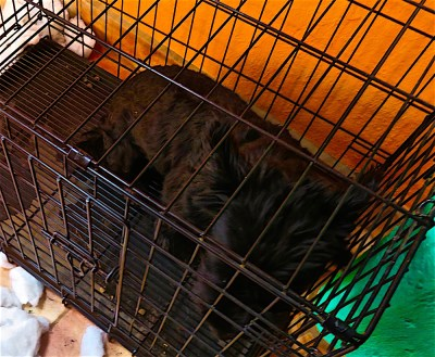 Still in your bedless cage, Morrie? Don't feel like going out to play? Won't narc on who did this dreadful deed? What a coincidence, huh? The date?