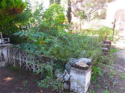 It took me a long time to find this site as it had once again been thoroughly taken over by castor bean trees and other native weeds. Some of the cornerstones had crumbled as well.