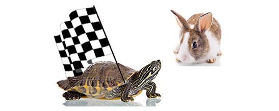 Tortoise Winner