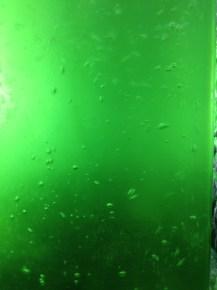 griffa_microalgae