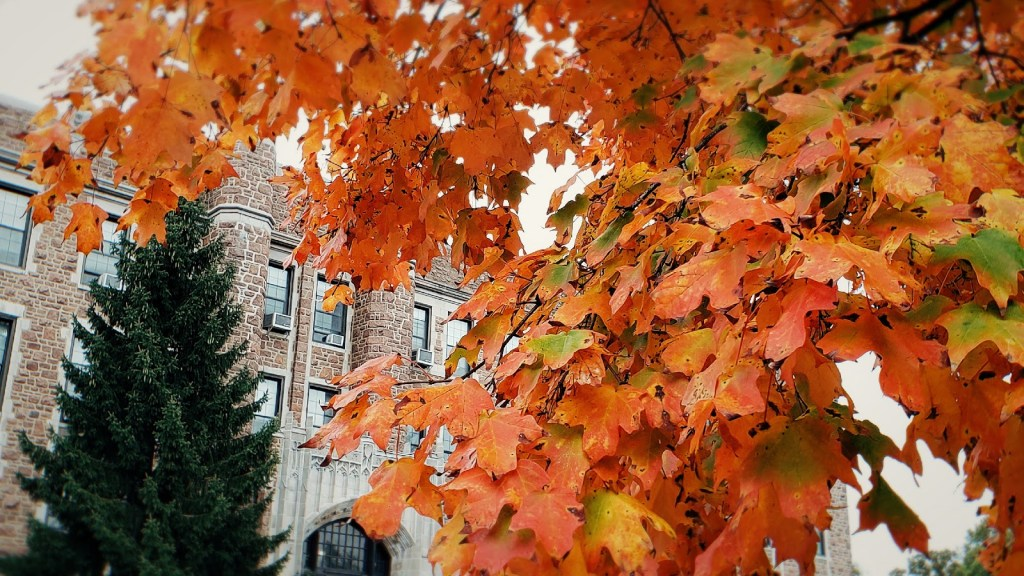 Fall leaves in front of Ryan Hall