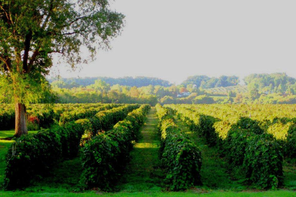 p-Niagara-Wine-1-adjust_54_990x660_201406012327