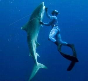 Shark Kabob Diver Gulf