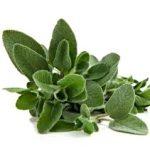 Spezie Salvia