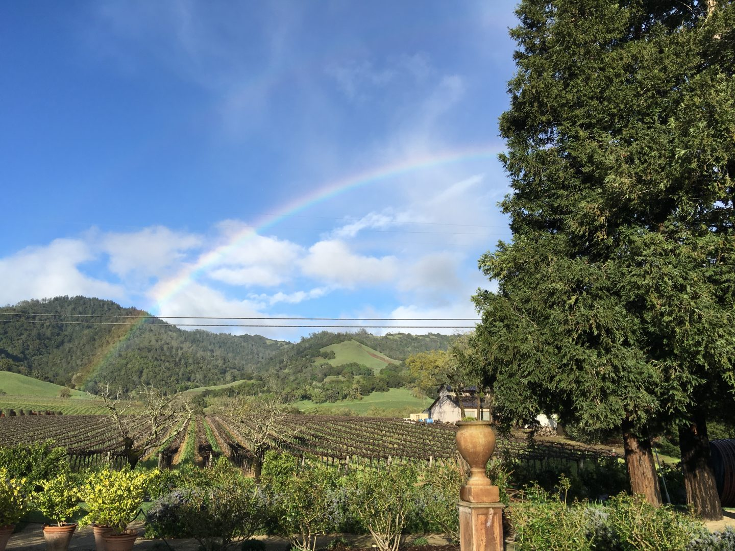 best wineries in sonoma