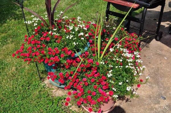 RSCSR-flowers
