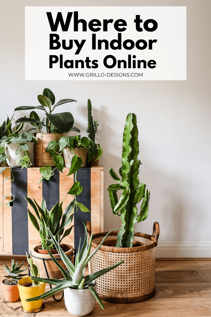 Where To Buy Indoor Plants Online Grillo Designs