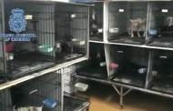Detienen a dos veterinarios: Secuestraron 207 perros y les cortaron las cuerdas vocales
