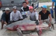 Tres pescadores de Progreso tienen buena pesca: Atrapan a un tiburón toro de 100 kilos