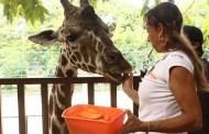 El Centenario y Animaya usan nuevos métodos para el cuidado y bienestar de los animales