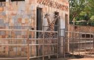 El cuidado de los animales de Animaya es un trabajo profesional avalado por la Semarnat y la Profepa