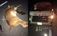 Taxista de Motul choca  y mata a una vaca, cerca del municipio de Baca