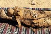 Arqueólogos descubren momias en una tumba del año 332 a.C